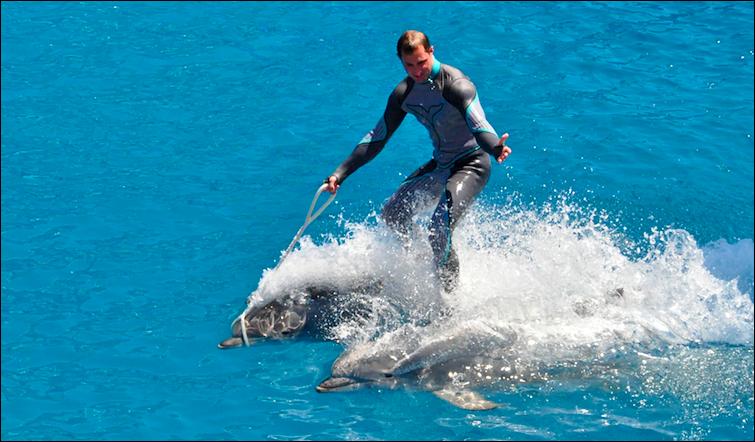 man riding dolphins seaworld san diego ca