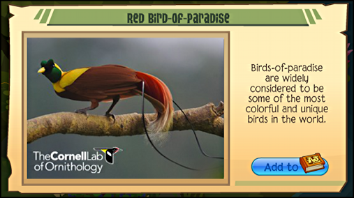 tropical bird info card