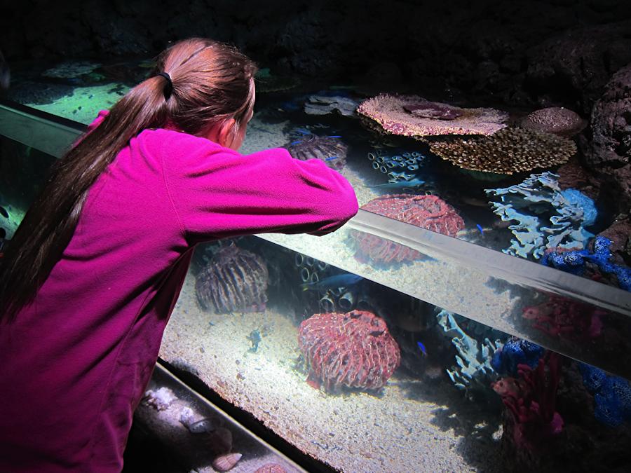 downtown-aquarium-denver-12