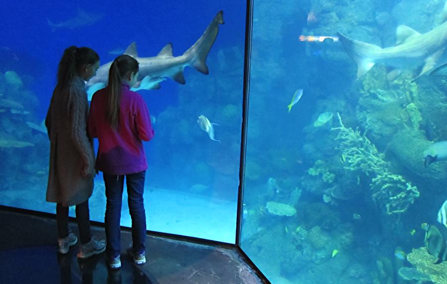 downtown-aquarium-denver-13