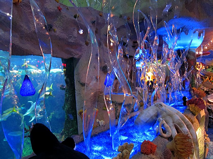 downtown-aquarium-denver-19