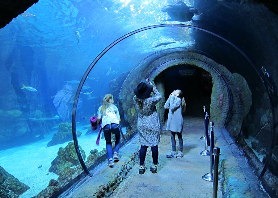 downtown-aquarium-denver-5