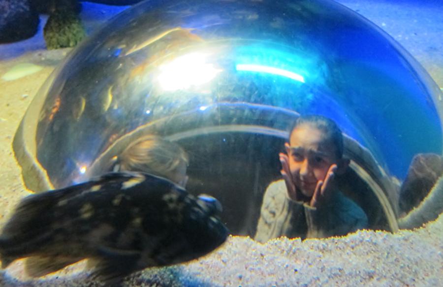 downtown-aquarium-denver-6