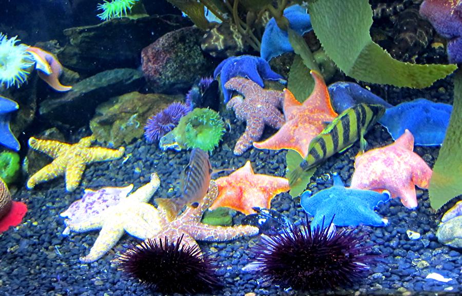 downtown-aquarium-denver-8