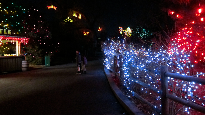 pathway lit up for christmas