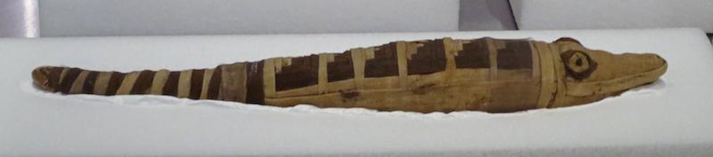 mummified crocodile