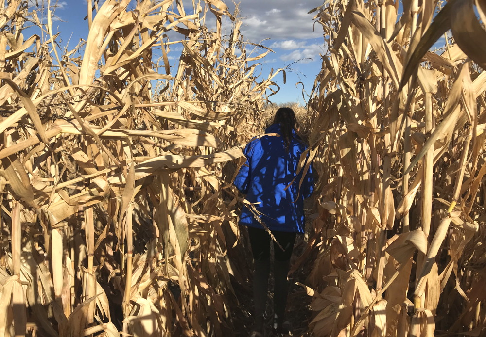 girl running through corn stalks