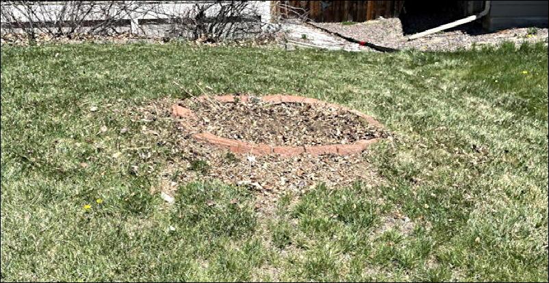 front yard dead zone, april 2021