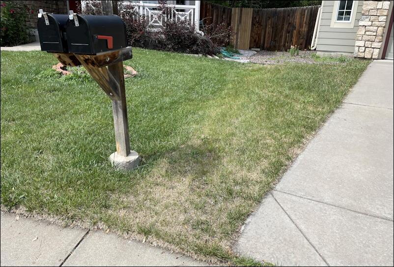 lawnbright fertilizer versus just water lawn grass yard
